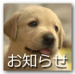 秋季ジュニアスポーツ大会(友遊ボール大会)は10月13日(月・祝)に延期